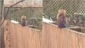 Em cena inédita, mulher flagra esquilo em seu quintal segurando uma faca.