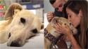 Vítima de maus-tratos, cadela tem medo de todos ao seu redor, mas passa a aceitar receber carinho dos novos donos.
