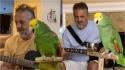O guitarrista Frank Maglio e seu papagaio roqueiro.