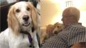 Cão que ajudava o dono a controlar ansiedade e depressão é roubado brutalmente e família oferece recompensa.