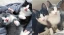 Gatinhos resgatados criam forte vínculo em abrigo e se tornam melhores amigos.