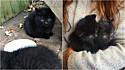 Família acolhe gatinhos de rua que foram até o jardim de sua casa pedir abrigo contra o frio.