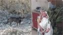 Cachorro avisa homem sobre bebê abandonado em montanha e criança é salva.