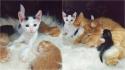 Gatinho órfão se integra à ninhada de gatos em abrigo e eles criam lindo vínculo afetivo.