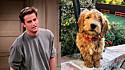 O ator Mathew Perry, o Chandler da aclamada série Friends, apresenta seu novo cachorrinho, Alfred.