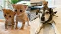 Gatinhos recém-adotados fazem improvável amizade com cachorro idoso da família.