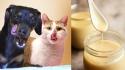 Cães e gatos podem comer leite condensado? Médico veterinário responde.