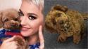 Katy Perry é criticada nas redes sociais após afirmar que dieta do seu cão é 100% vegana.