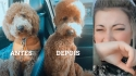 Cadela volta de pet shop com a tosa mais estranha e reação de dona viraliza.