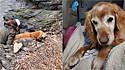 Comunidade se mobiliza e encontra cão golden retriever perdido por 5 dias.
