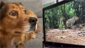 Cadela tem a melhor reação quando vê esquilos 'dentro' da TV.