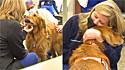 Cão de terapia golden retriever ajuda a aliviar estresse dos profissionais de saúde durante a pandemia.
