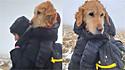 Homem encontra cadela labradora perdida em montanha e a carrega por 10 km.
