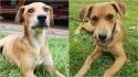 Corpo de Bombeiros de Catanduva adota cão vira-lata vítima de maus-tratos.