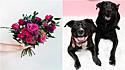 Floricultura americana 'contrata' cães como entregadores para o dia dos namorados