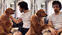 Cadela da raça golden retriever viraliza no TikTok por não saber se gosta ou não do carinho de dono.
