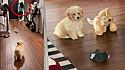 Cachorro tem reação engraçada ao ver seu dono chegar em casa fantasiado de ladrão.