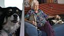 A cadela Lulu herdou cerca de 5 milhões de dólares de seu antigo dono.