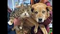 Os amigos cachorro e gato estão juntos há 8 anos.