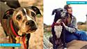 Mulher adota cão idoso e com câncer terminal na Flórida (EUA).