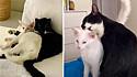 Gatinha de rua faz de quintal de mulher seu lar, é adotada e aceita por gato que já morava lá.