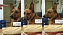 A obediência do cachorrinho foi provada várias vezes.