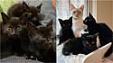O trio de gatinhos foram muito bem recebidos pelo gato Bear na sua residência em Indianápolis, Indiana (EUA).