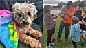 A cachorrinha despareceu durante uma mudança da família que ocorreu dias antes do furacão Harvey atingir o Texas.
