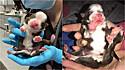 A cachorrinha nasceu surpreendentemente com vida e com uma combinação de doenças congênitas.