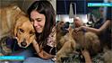 Golden retriever se torna o cupido de jovens que se conheceram em clínica veterinária.