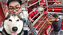 O homem, que mora em Chang Ma, Tailândia, simulou um assalto para ver a reação do seu cachorro.