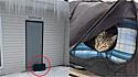 Os gatinhos foram abandonados no dia dia 18 de fevereiro em New Miami, Ohio, Estados Unidos.