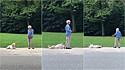 Cão faz birra por não querer interromper seu passeio no parque.