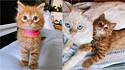 A gatinha Cheese buscou ganhar o amor da sua irmã felina mais velha.