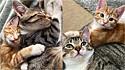 A gatinhas Lola e Poppy, que residem na Inglaterra com a sua família, formaram uma linda amizade.
