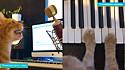 O gatinho Monsieur Paterson tem feito o maior sucesso no Instagram com as suas músicas remixadas.