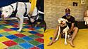 A ONG Patas para Você doou a prótese produzida em Denver, no Colorado, nos Estados Unidos para o pit bull Sansão.