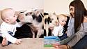 Mulher presenteia filho com mini porca, pelo fato dele adorar o desenho da Peppa Pig. E desde que a porquinha foi adotada o bebê não se desgruda dela.