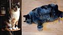 O antes e depois da gata Cami.