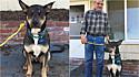 Cachorro percebe dono se sufocando durante a noite e cutuca até acordá-lo em Eugene, Oregon, Estados Unidos.