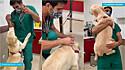 Veterinário apaixonado pela profissão torna a hora da vacina um momento divertido os pets que passam no seu consultório.