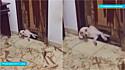 Homem filma a destruição que o seu cachorro fez na porta e vídeo viraliza no TikTok.