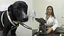 Cachorro de rua entra em clinica veterinária em Juazeiro do Norte, Ceará, com a patinha machucada e ganha tratamento para câncer.