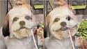 O sorriso que o pequeno shih-tzu deu ao ver sua dona encantou milhões de internautas.