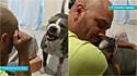 Vídeos de donos falando amorosamente com seus pit bulls e eles se derretendo viralizam no TikTok.