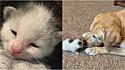 Paxton, o cão idoso, se encanta por filhote de gato e ajuda o seu dono a cuidá-lo.