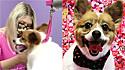 Pet shop presta serviço gratuito de tosa para abrigos de animais para incentivar a adoção.