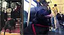Cadela embarca em ônibus municipal sozinha caso o seu dono demore para levá-la ao parque.
