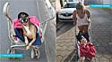 Cachorrinha paraplégica vive feliz em novo lar após ser resgatada das ruas.
