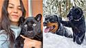 Mulher salva vida de pantera na Rússia e felina se torna melhor amiga de rottweiler.